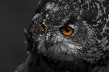 Top 5 ống kính tốt nhất dành cho người mới bắt đầu chụp ảnh động vật hoang dã