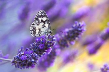 A selective focus shot of a butterfly sitting on a purple flower